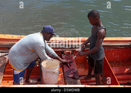 Local fisherman at Micoud harbour gutting and preparing his catch for sale, St Lucia - Stock Photo