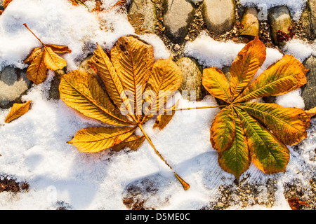 Leaves on the ground in Simplon Park (Parco Sempione) at winter. - Stock Photo