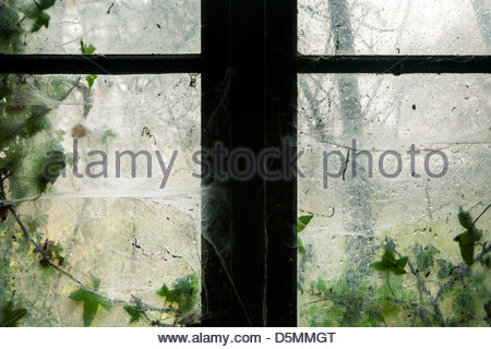 Ivy growing behind a dirty window pane - Stock Photo