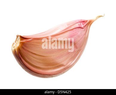 Garlic clove. - Stock Photo