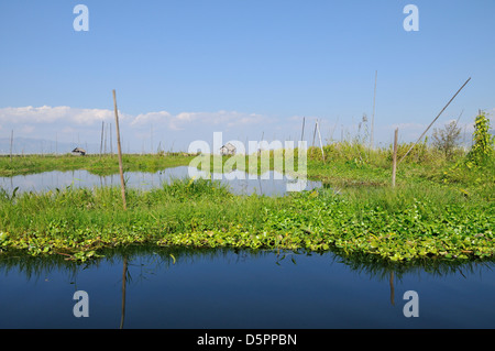 Floating Garden, Inle Lake, Shan State, Myanmar, Southeast Asia - Stock Photo