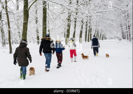 Family dog walking through snow in Thorndon Country Park, Brentwood, Essex, England, UK - Stock Photo