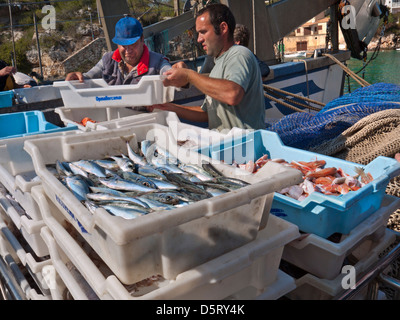 Mallorca fishing catch quayside with Fishermen sorting packing and unloading their fresh fish catch at Cala Figuera - Stock Photo