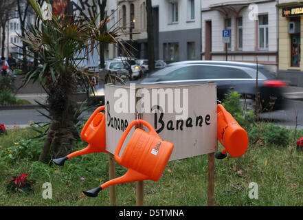 Watering cans hang on a sign behind banana trees on a traffic island within a roundabout in Cologne-Suedstadt, Germany, - Stock Photo