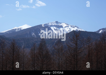 Mt Yatsugatake With Japanese Larch Forest In Autumn