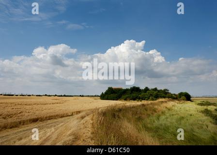Bradwell on sea, Essex, Farmland and marshes. Protected habitat, England,Britain,UK, - Stock Photo