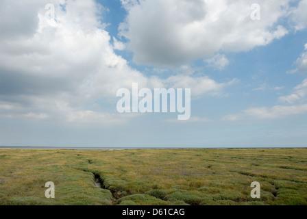 Salt,Marshes, Bradwell on sea, Essex, England,Britain,UK, - Stock Photo