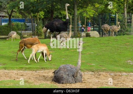Various animals in a zoo. - Stock Photo