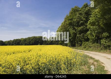 Rine Wetlands Rheinland-Pfalz Germany - Stock Photo