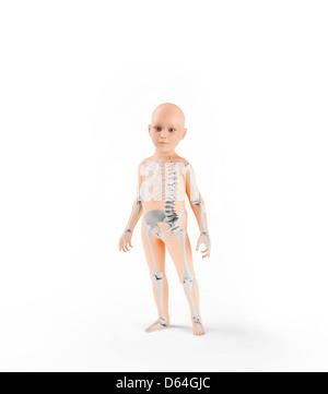 Child skeleton, artwork - Stock Photo