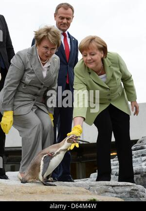 Valentina Pivnenko, chairwoman of the Baltic Sea Parliamentary Conference, Poland's Prime Minister Donald Tusk and German Chancellor Angela Merkel (L-R) feed penguins in the Oceaneum during the 'Council of the Baltic Sea States' leader summit in Stralsund, May 31, 2012. Photo: Fabian Bimmer  +++(c) dpa - Bildfunk+++
