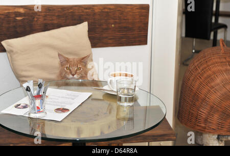 A cat sits on a bench at Café Neko (Japanese for 'Cat') in Vienna, Austria, 15 May 2012. Guests can come to the - Stock Photo