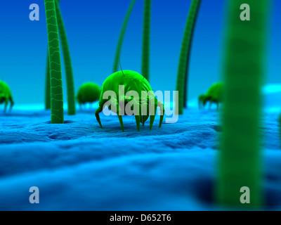 Dust mite, artwork