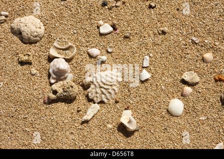 Seashell on the shore - Stock Photo