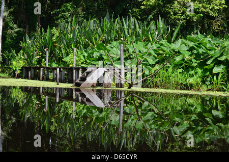 reflections on a lake in the Amazon rainforest - Stock Photo