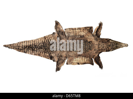 Alligator Skin Stock Photo 23395734 Alamy