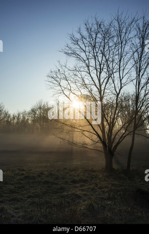 Early Morning Sun Through The Fog & Trees - Stock Photo