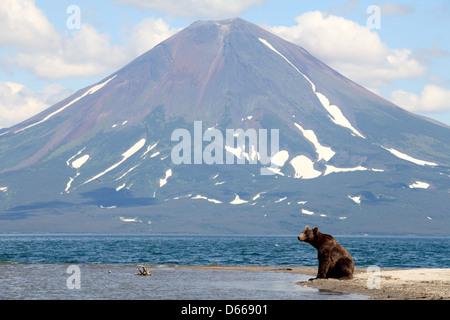Bear and a volcano - Stock Photo