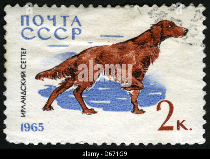 USSR, 1965, post mark,stamp,animals,animals illustrations,dog,,fauna,Irish Setter - Stock Photo