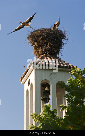 Two white storks in nest on top of church steeple - Stock Photo