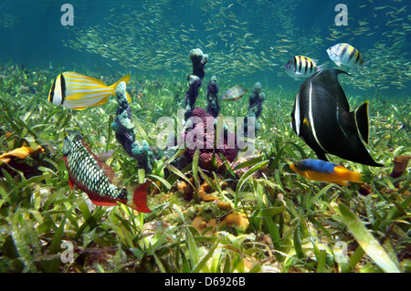 Colorful sea sponges and tropical fish in shallow seabed of turtle grass - Stock Photo