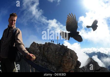 Tourist Matthias Mueller feeds mountain birds with an apple on Zugspitze, Germany, 07 August 2012. Photo: Felix - Stock Photo