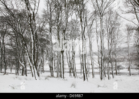 Trees in snowy forest - Stock Photo