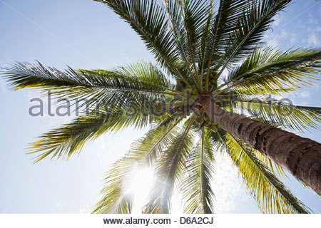 Low angle view of palm tree - Stock Photo