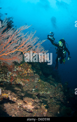 A female diver with a video camera on a reef - Stock Photo