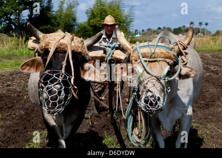 Agriculture, farmers, peasants, people and man working in farm fields. ANAP agrarian cooperative in Guines, Cuba. - Stock Photo