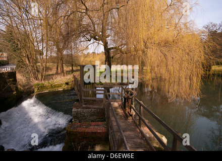Weeping Willows Overhanging The River Wey Flowing Through The Surrey Countryside Just Outside Farnham Surrey UK - Stock Photo