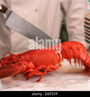 Cutting Lobster in Half - Stock Photo