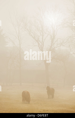 Two horses in a fenced pasture at sunrise in fog - Stock Photo