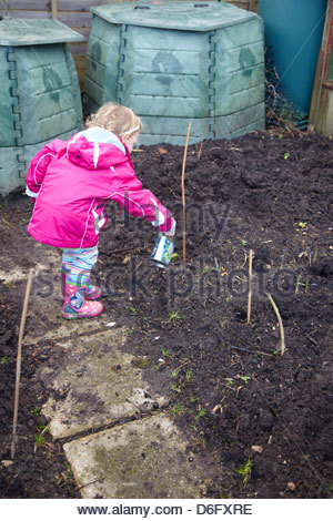 Little girl watering garlic shoot on an allotment  Variety: Solent Wight, British grown - Stock Photo