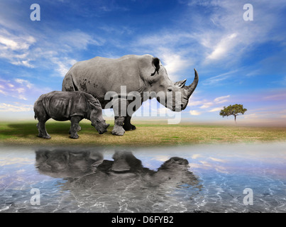 Mother Rhino And A Calf With Water Reflection - Stock Photo