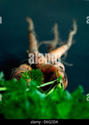 Organic carrots tops with soil. - Stock Photo