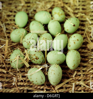 Green chocolate mini eggs in straw - Stock Photo