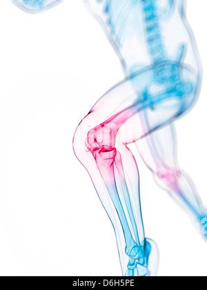 Knee pain, conceptual artwork - Stock Photo