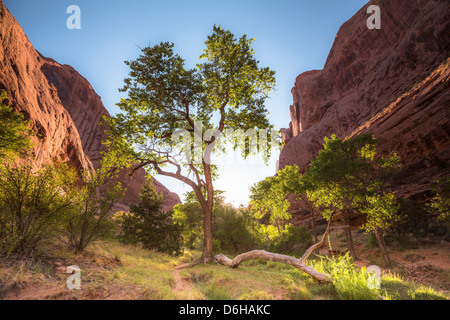Trees growing in green valley - Stock Photo