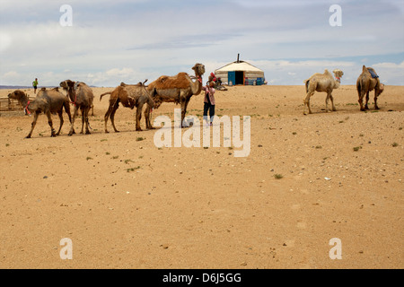 A Mongolian family, yurt and camels in the Gobi desert, Mongolia, Central Asia, Asia - Stock Photo