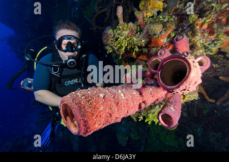 Diver enjoying the tube sponges on a wall dive in the Turks and Caicos, West Indies, Caribbean, Central America - Stock Photo