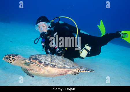 Green turtle cruising the reef with diver, Turks and Caicos, West Indies, Caribbean, Central America - Stock Photo