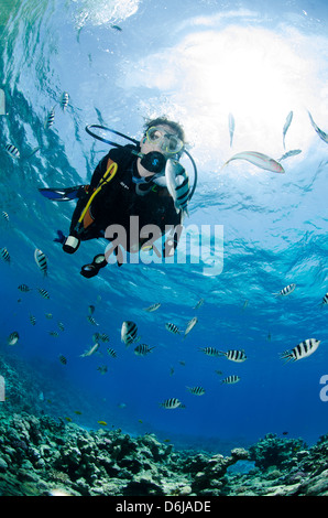 One scuba diver diving in shallow water, surrounded by fish, Ras Mohammed National Park, Red Sea, Egypt, North Africa, - Stock Photo