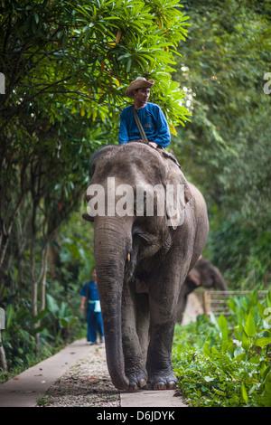 Four Seasons Elephant Camp, Northern Thailand, Southeast Asia, Asia - Stock Photo