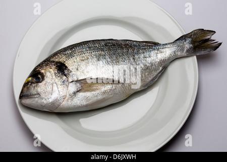Fresh Sea Bream on white plate - Stock Photo