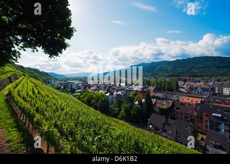 Vineyards, Freiburg, Baden-Wurttemberg, Germany, Europe - Stock Photo