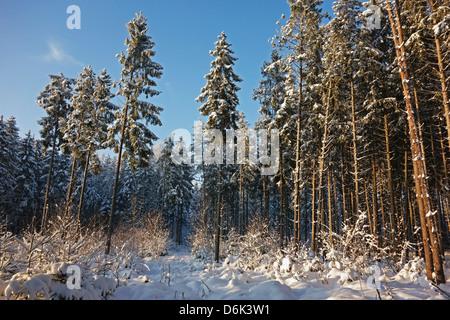 Black Forest in winter, near Villingen-Schwenningen, Schwarzwald-Baar, Baden-Wurttemberg, Germany, Europe - Stock Photo