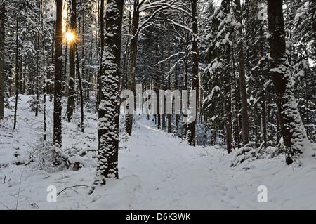 Rural winter scene, near Villingen-Schwenningen, Schwarzwald-Baar, Baden-Wurttemberg, Germany, Europe - Stock Photo
