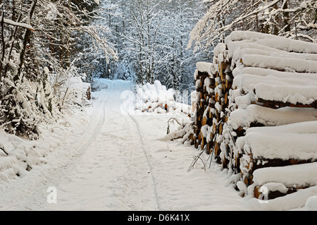 Black Forest in winter, near Villingen-Schwenningen, Schwarzwald-Baar, Baden-Wurttemberg, Germany, Europe - Stock Photo