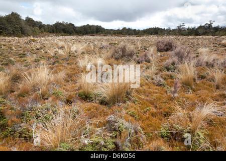 Dried grass, Tongariro National Park, New Zealand - Stock Photo